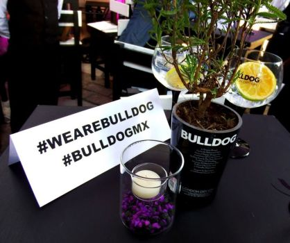 bulldoggin003